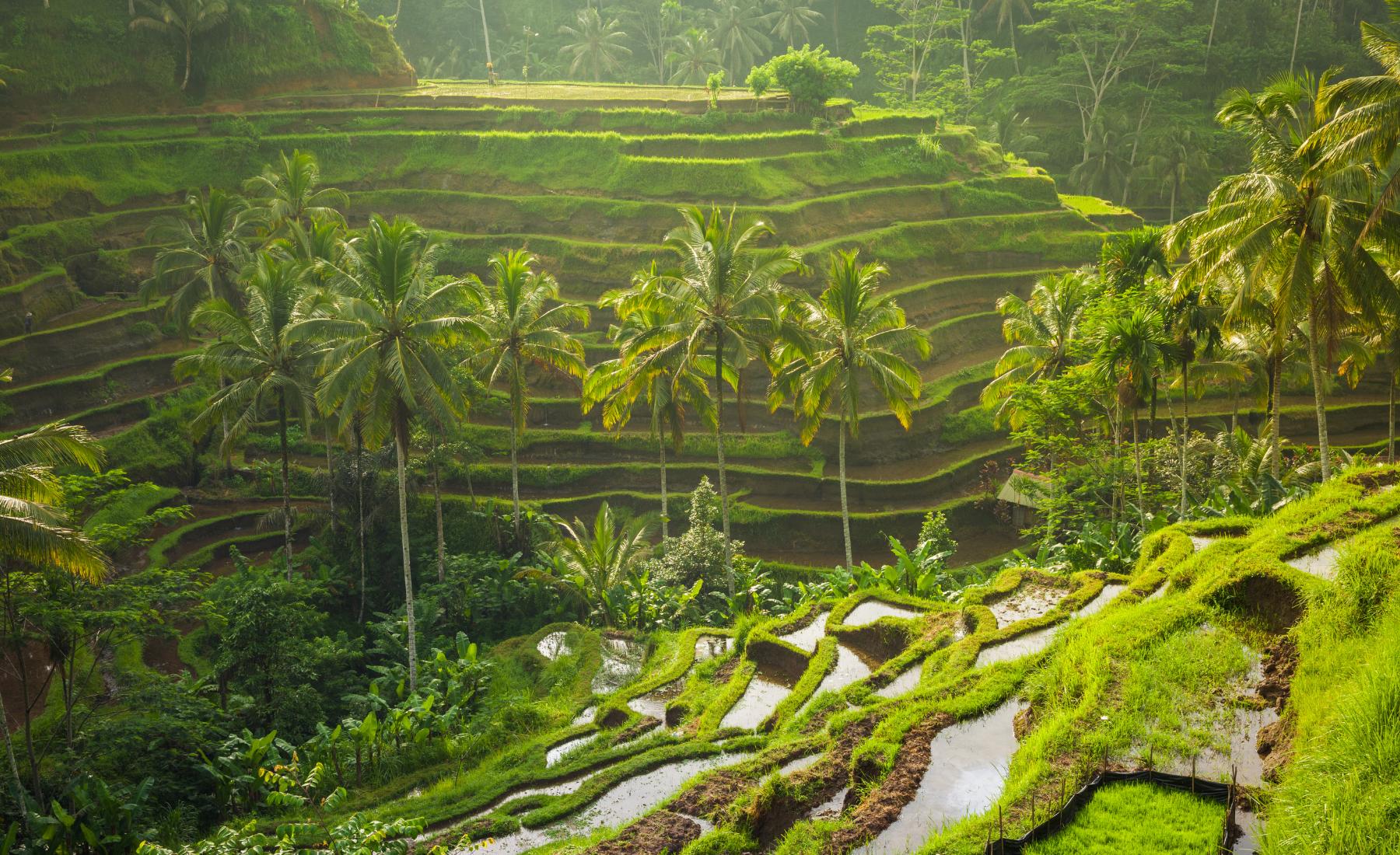 De highlights van het geliefde Bali