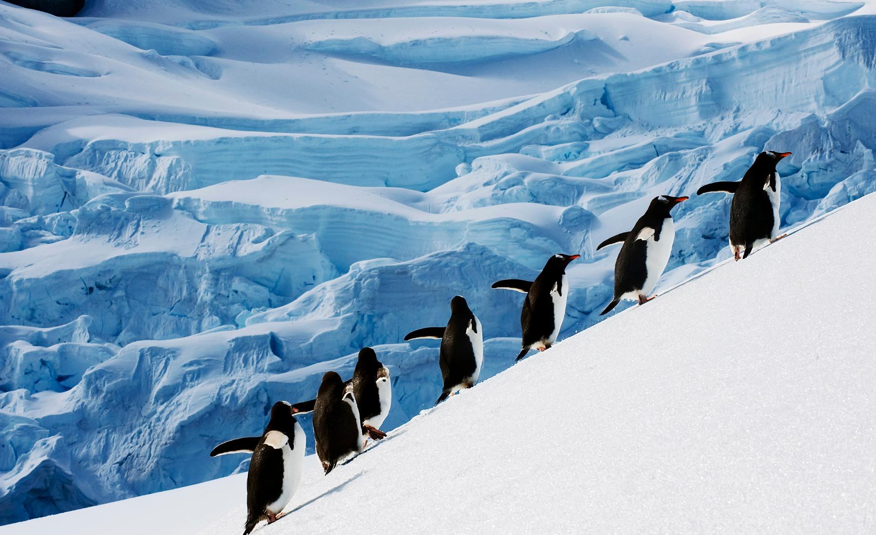 Wist je dat… Over Antarctica!